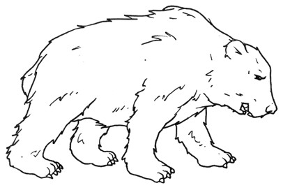 Polar bear - free coloring pages