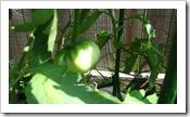garden 058