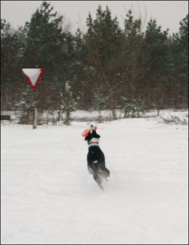 frisbee15
