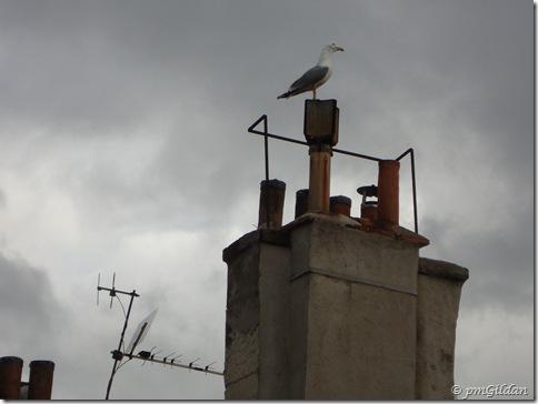 Noël 2010 279