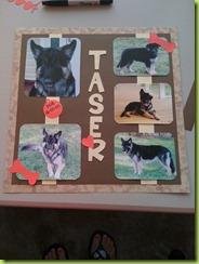 Taser (2)