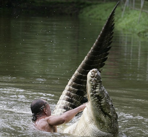 eXtreme Crocodile Handler