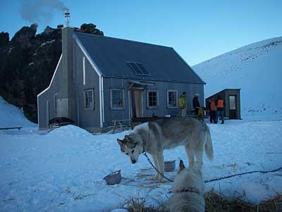 sled-dog-2.jpg