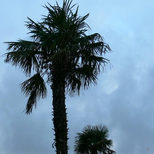 palmiers 360