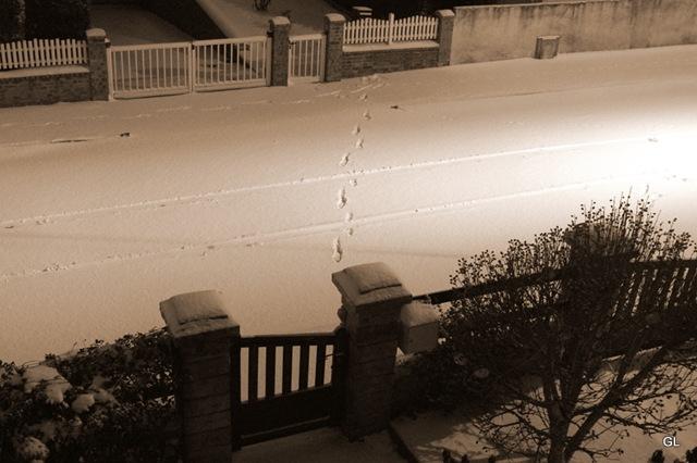neige 13-1-2010 - jardin 003-2