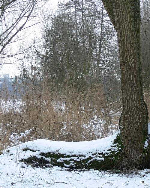 neige 11-1-2010 - rouelles 019