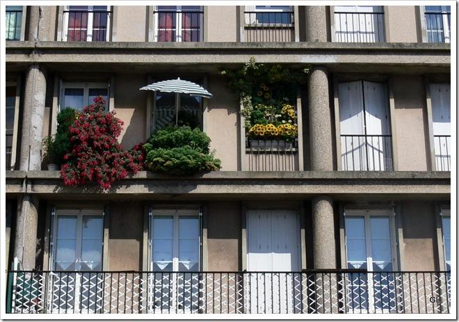 rue de paris tournesol 001