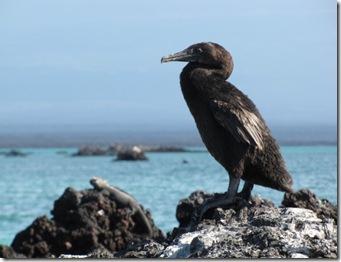 Galapagos 573 [800x600]