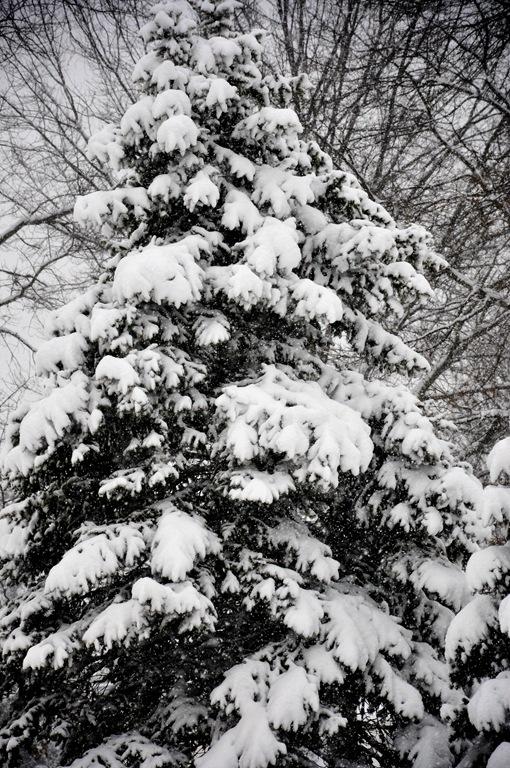blizzard 8