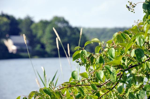 lake 10