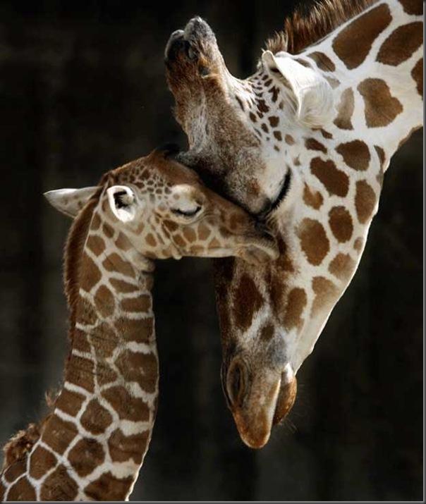 Excelentes fotografias de Animais (27)
