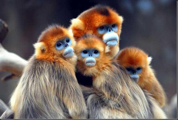 Excelentes fotografias de Animais (6)