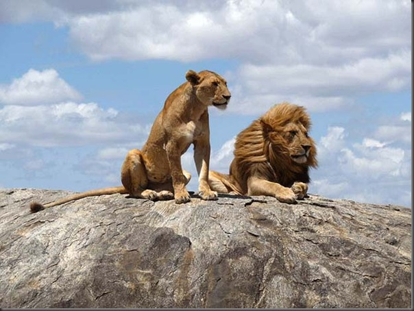 Excelentes fotografias de Animais