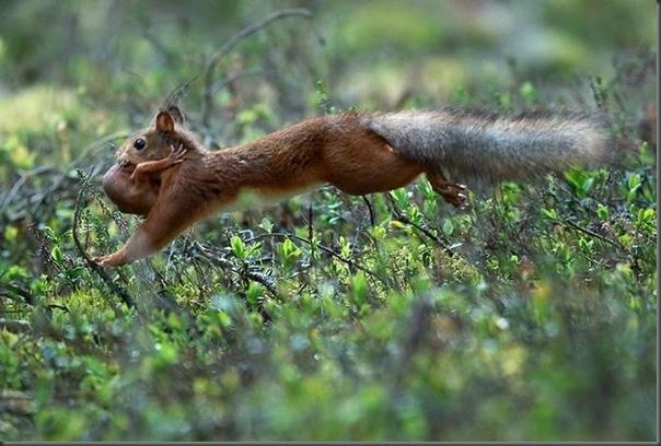 Lindas imagens de animais por Andris Eglitis (8)