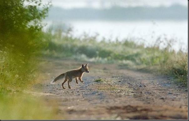 Lindas imagens de animais por Andris Eglitis (18)