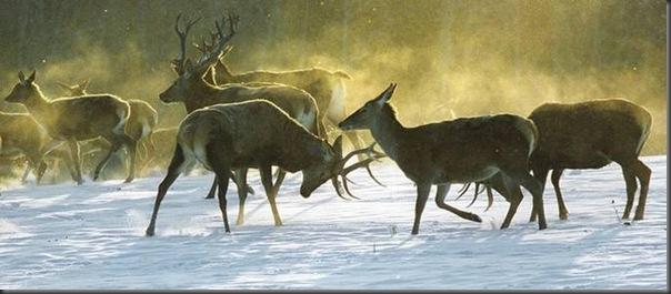 Lindas imagens de animais por Andris Eglitis (19)