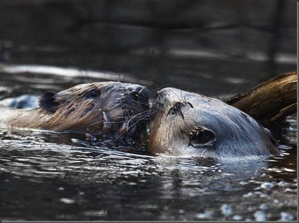 Lindas imagens de animais por Andris Eglitis (11)