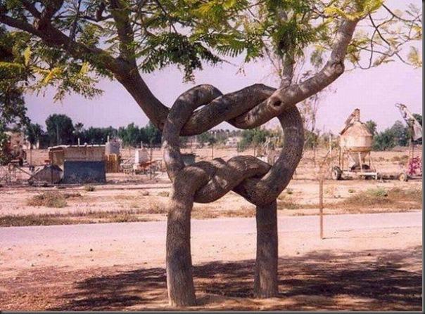 Lindas árvores (12)