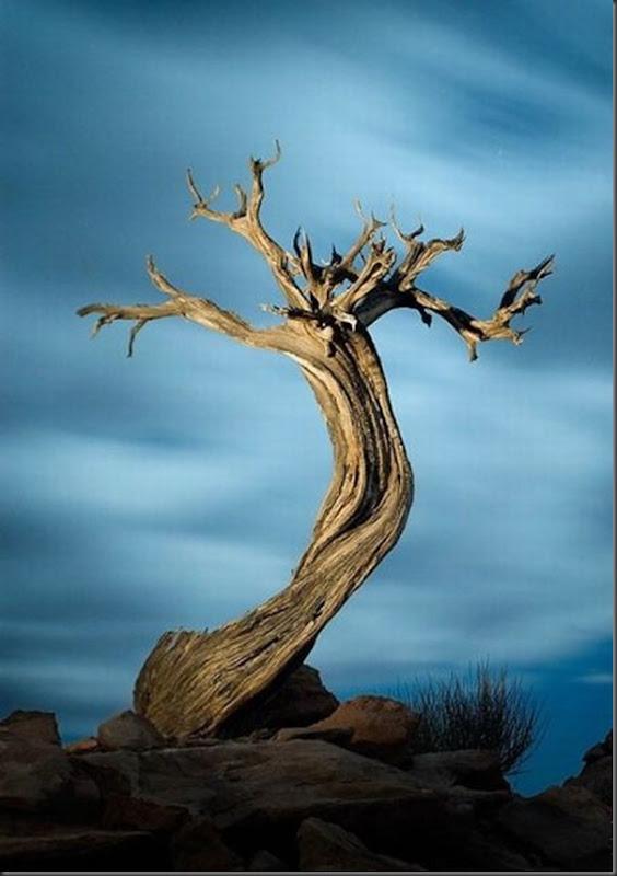 Lindas árvores (8)
