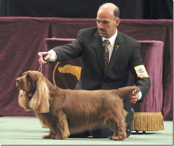 Belos e estranhos penteados caninos (11)
