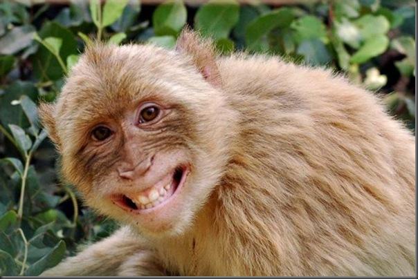 O sorriso dos animais (5)