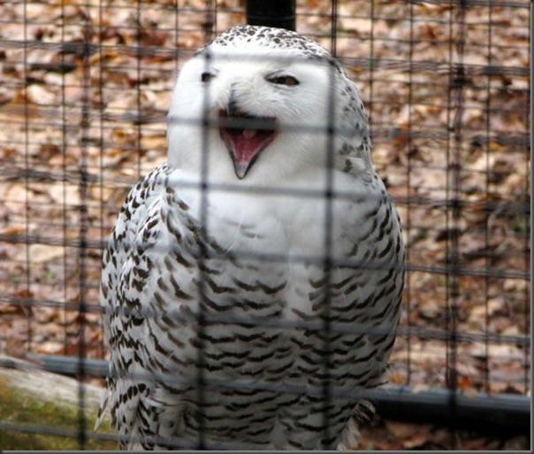 O sorriso dos animais (3)