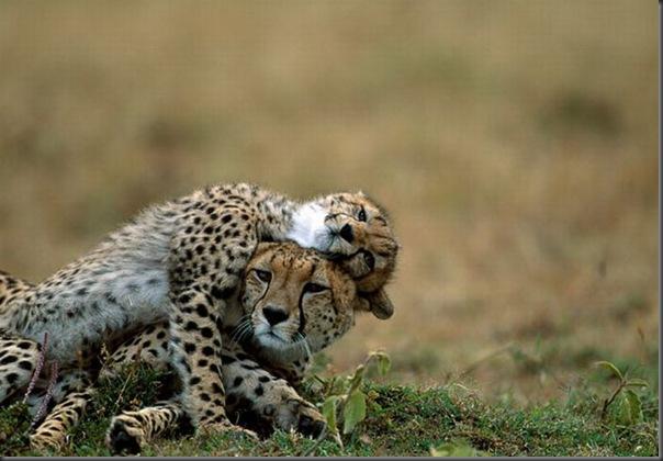 Animais em familia (13)