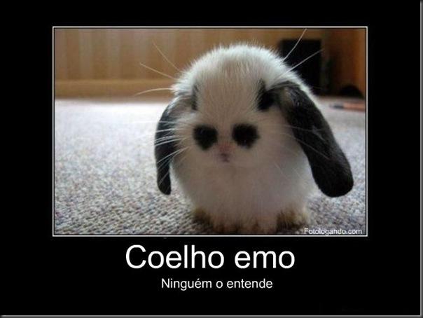 coelho emo