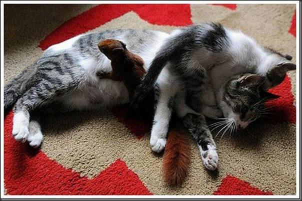 Gatos adoram um esquilo (7)