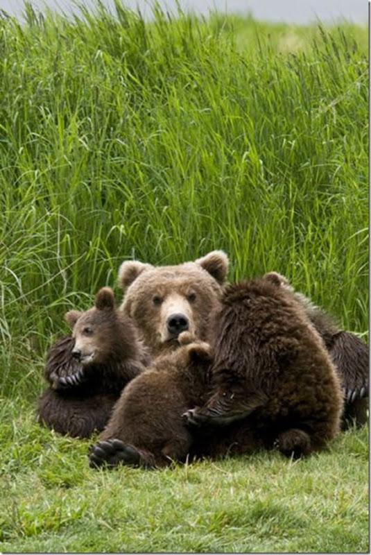 Ursinhos carinhosos (28)