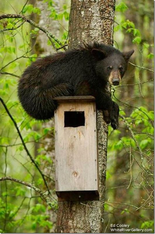 Ursinhos carinhosos (21)