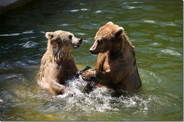 Ursinhos carinhosos (19)