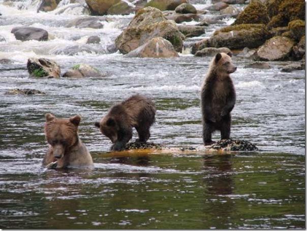 Ursinhos carinhosos (17)
