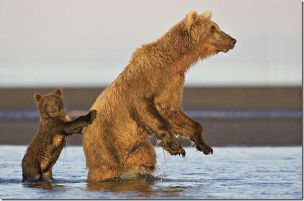 Ursinhos carinhosos (5)