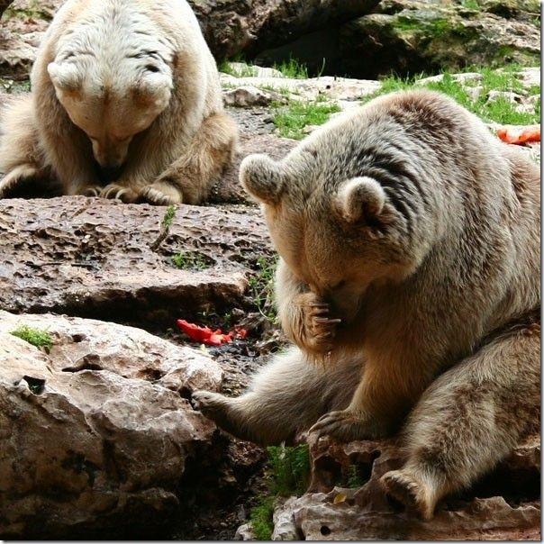 Ursinhos carinhosos (3)