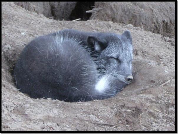 Adoráveis animais dormindo (16)