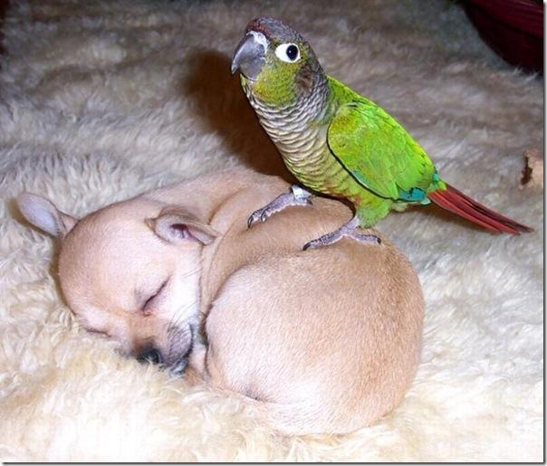 Adoráveis animais dormindo (13)