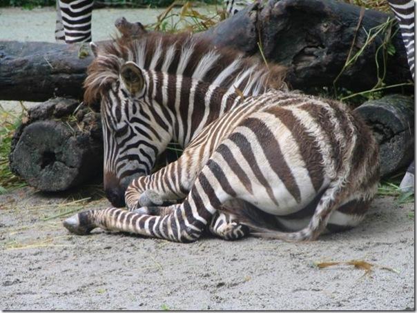 Adoráveis animais dormindo (11)