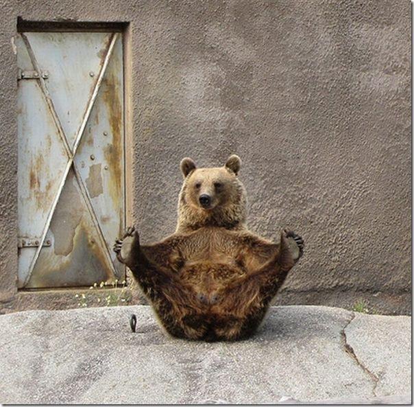 Urso praticando Yoga