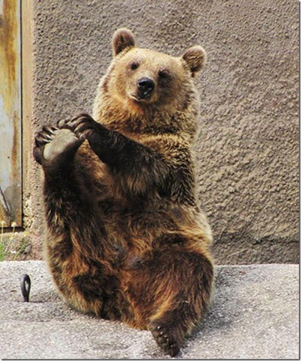 Urso praticando Yoga (5)