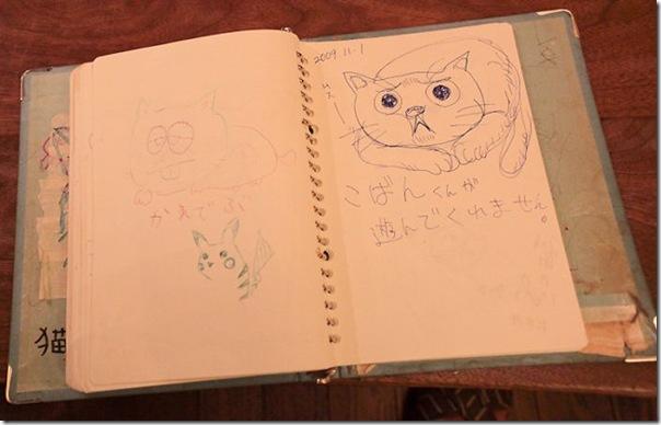 Tóquio gato café (10)