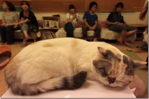 Tóquio gato café (3)