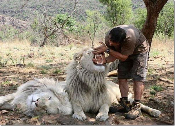 Kevin Richardson, O encantador de leões (11)