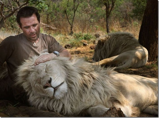 Kevin Richardson, O encantador de leões (10)