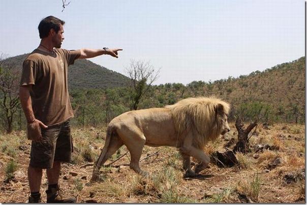 Kevin Richardson, O encantador de leões (8)