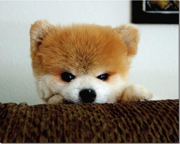 Cachorrinho mais fofo do mundo