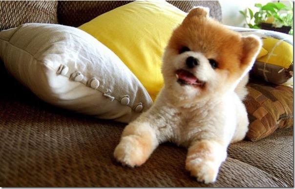 Cachorrinho mais fofo do mundo (5)