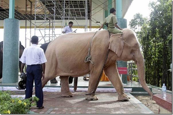 Elefante branco (5)