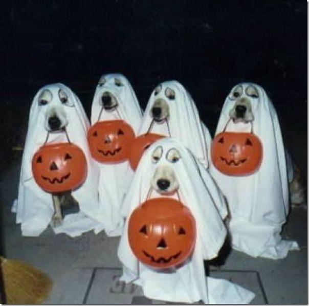 Fotos engraçadas dos Halloween (2)