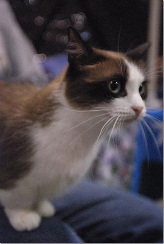 Gatinhos fofinhos (9)